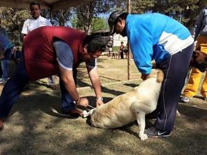 Más-de-mil-vacunas-gratuitas-fueron-aplicadas-a-caninos-y-felinos-en-Nochixtlán